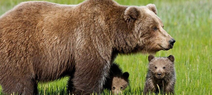Photo of Troppi cani liberi nei boschi dell'orso, il monito del Wwf
