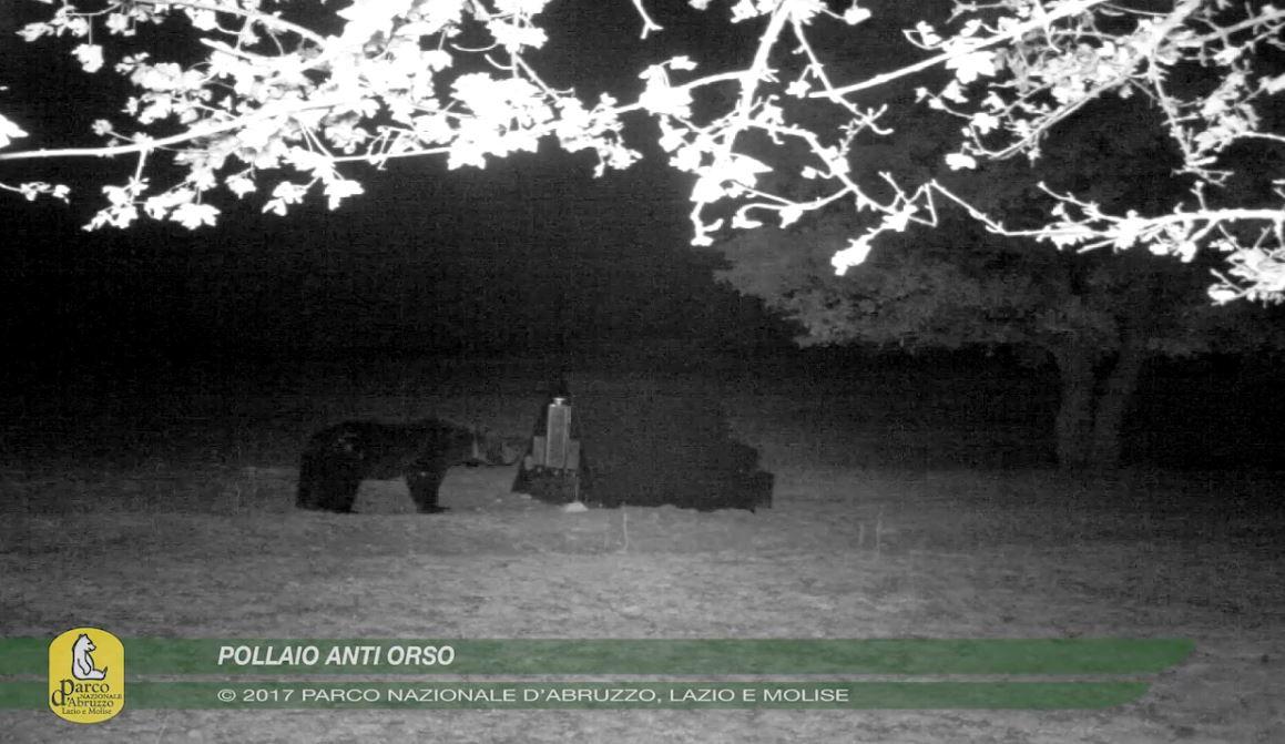 Photo of Arriva il pollaio anti-orso, il progetto del Parco d'Abruzzo, Lazio e Molise