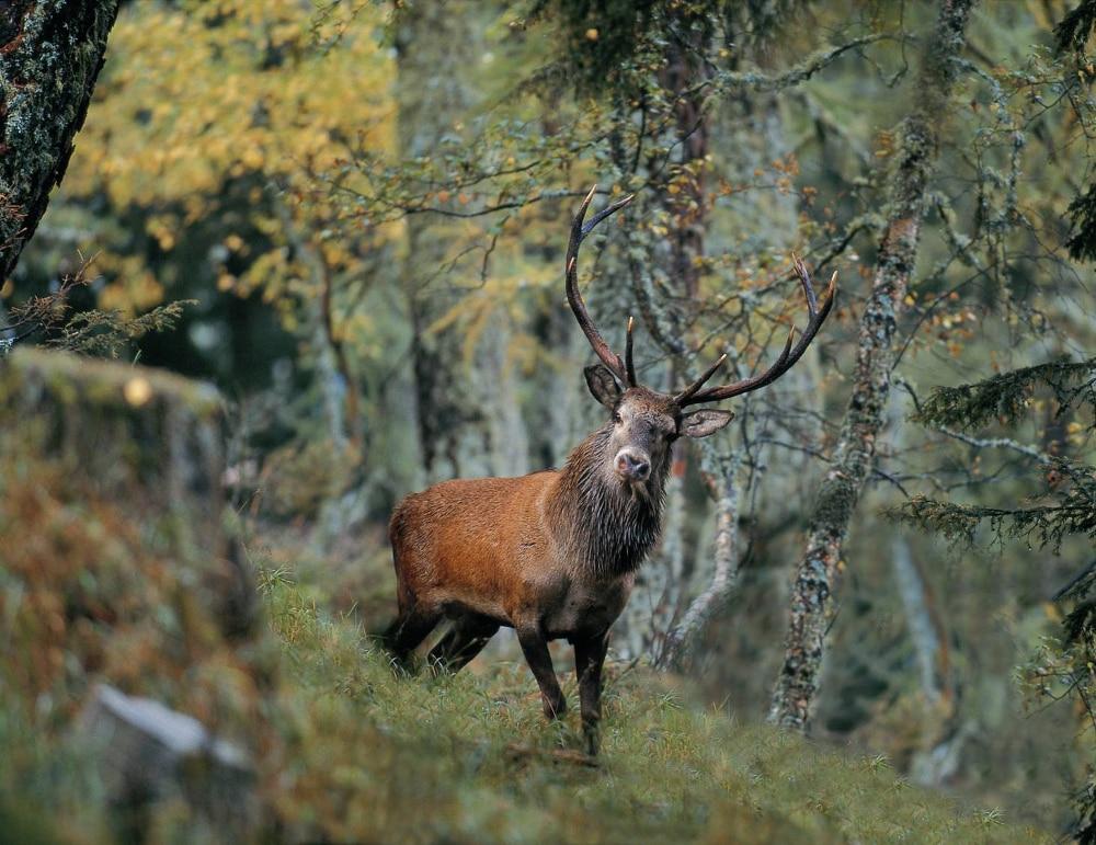 Photo of Parco dello Stelvio, l'inverno duro ha ucciso più di 300 cervi
