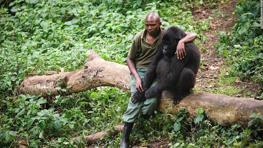 Photo of Uccisi 5 ranger in un assalto nel Parco di Virunga, dove si lotta per proteggere i gorilla di montagna