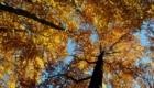 Faggeta in autunno - Foto @ Stefano Ardito
