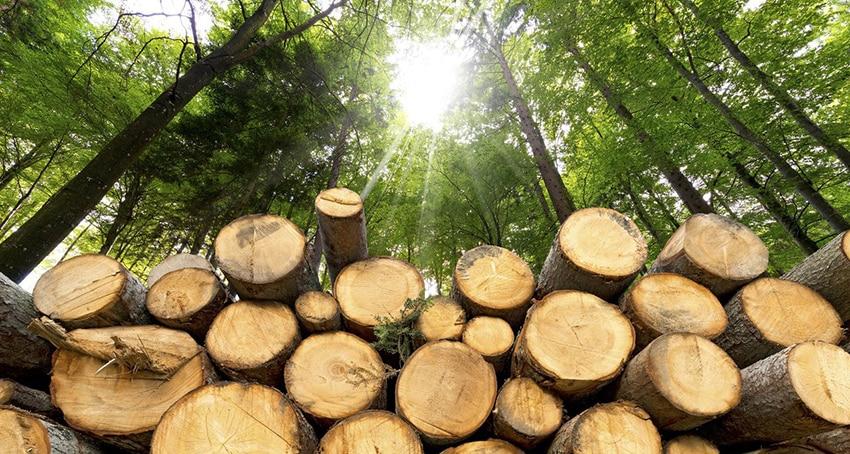 Photo of Scarascia Mugnozza: la filiera foresta-legno può diventare risorsa fondamentale