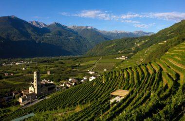 vinitaly, vini eroici, prodotti locali, vino,