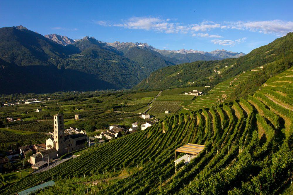 """Photo of Al Vinitaly si parla anche dei vini """"eroici"""""""