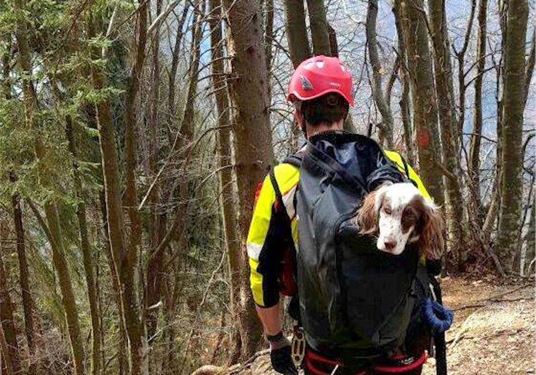 soccorso alpino, cani, cnsas, sicurezza in montagna