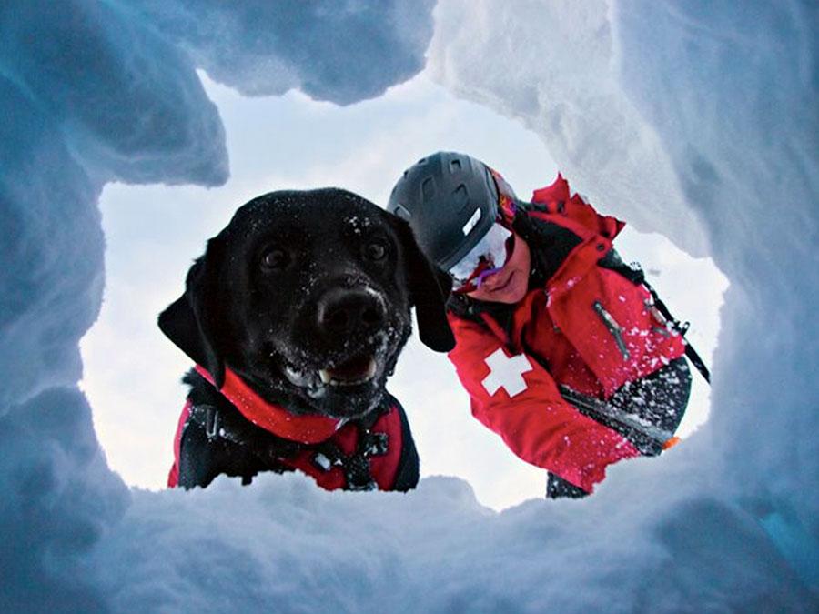 Photo of Il naso elettronico che potrebbe sostituire i cani da soccorso