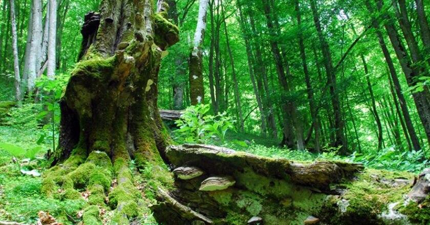 natura, ricerca, gran sasso, foreste