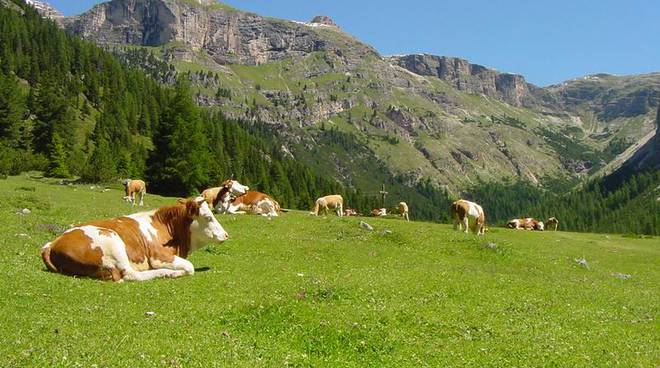 Photo of Intascano fondi europei per alpeggi inesistenti, droni scoprono la truffa