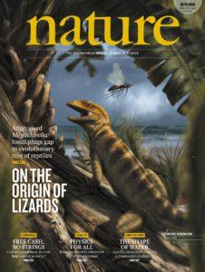 Fauna, ricerca scientifica, Megachirella wachtleri