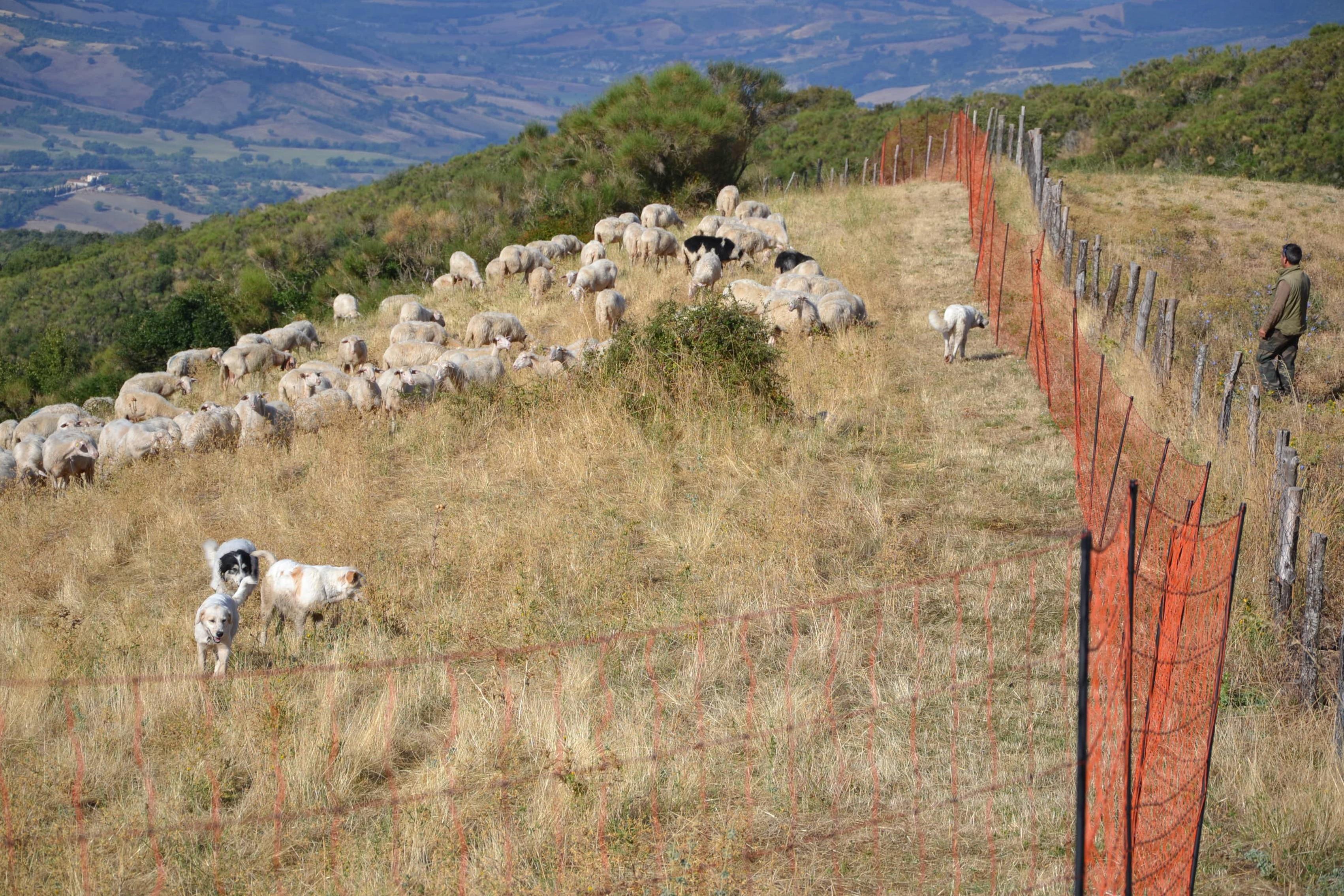 Photo of Bolzano: incentivi sulle recinzioni elettrificate per proteggere il bestiame