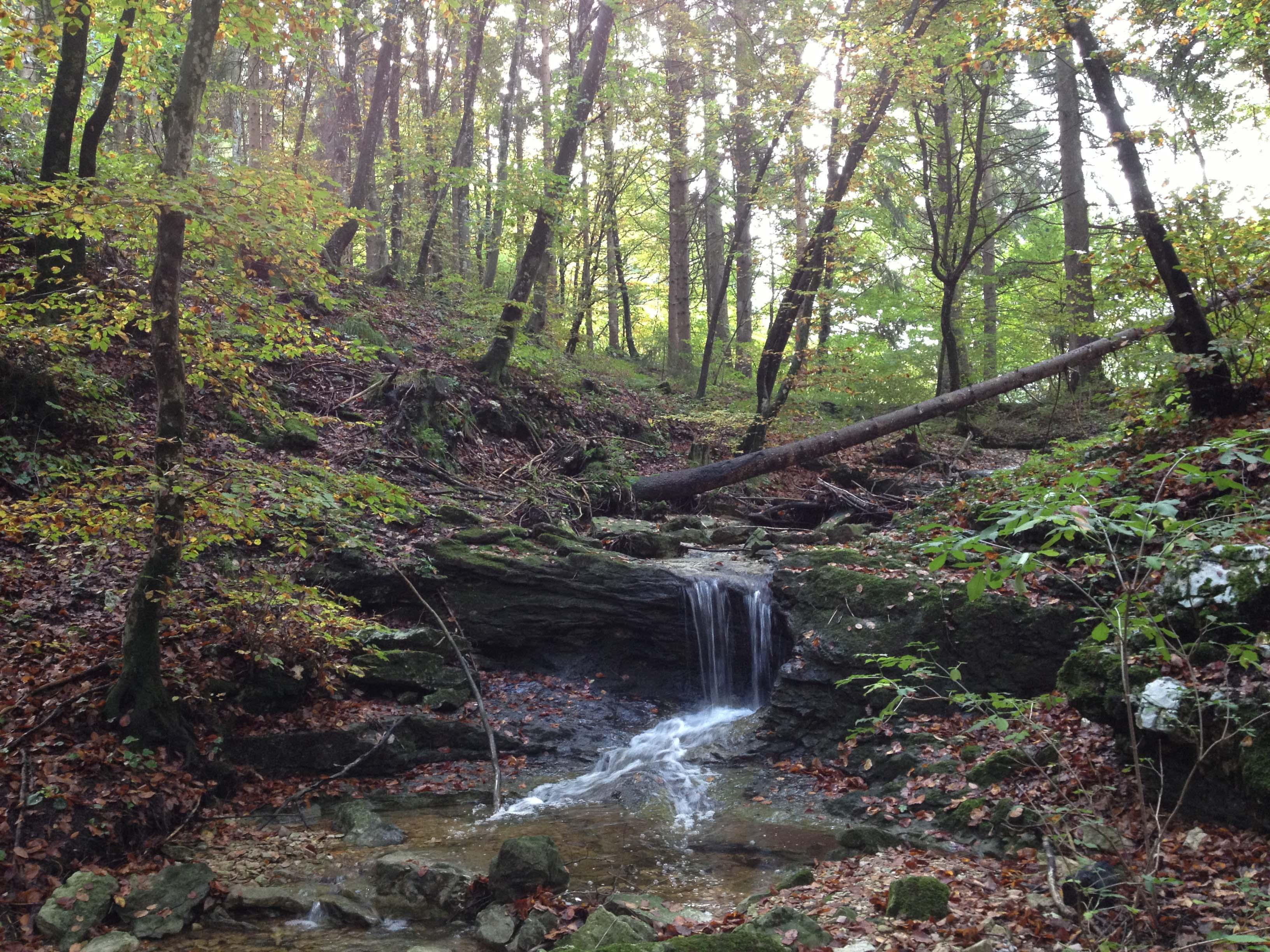Photo of Forest-bathing: il prodigioso bagno nella foresta (di fai della Paganella)