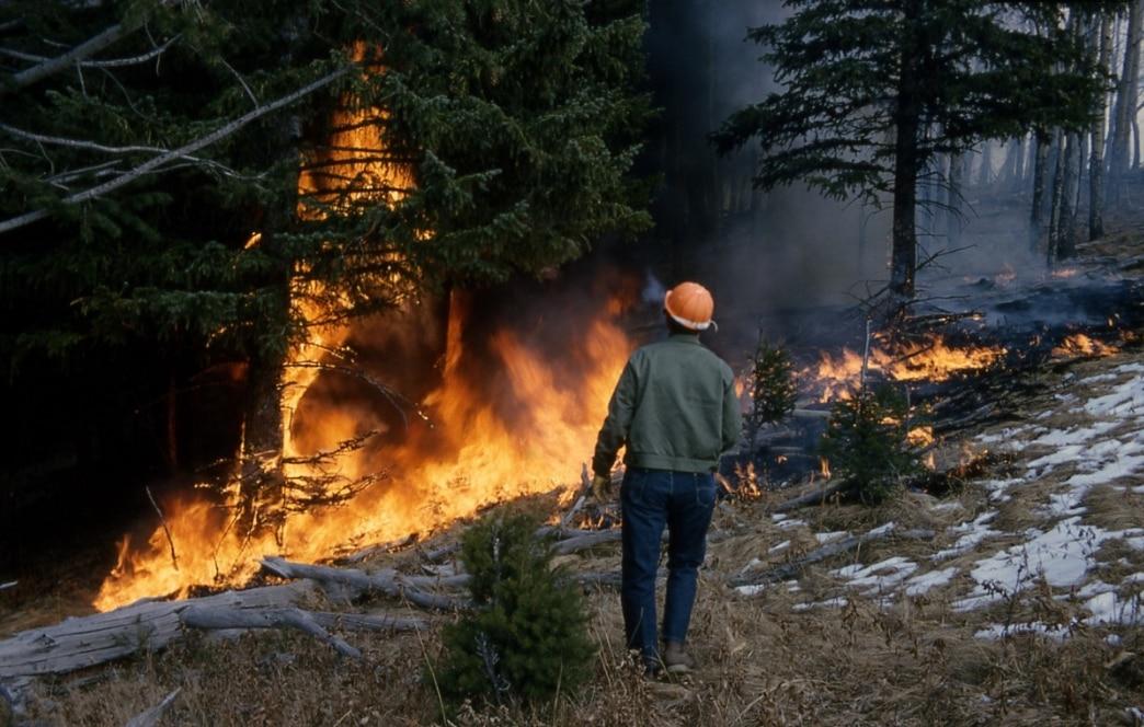 Photo of Alto rischio incendi boschivi in Liguria. Cosa fare per prevenire?
