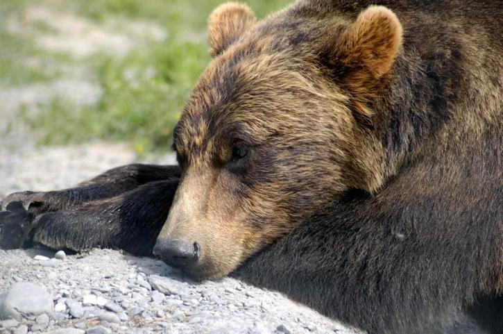Photo of In letargo come gli orsi e le marmotte: arriva il materasso che regola la temperatura corporea