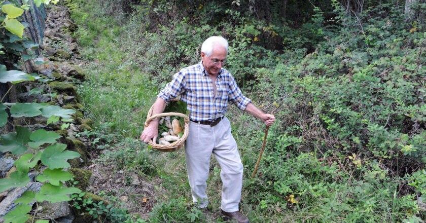 Un cercatore di funghi nei boschi
