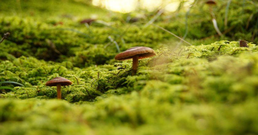 sicurezza, montagna, funghi, cronaca nera