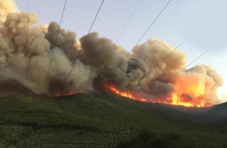 Monte Serra, incendio, ambiente, cronaca