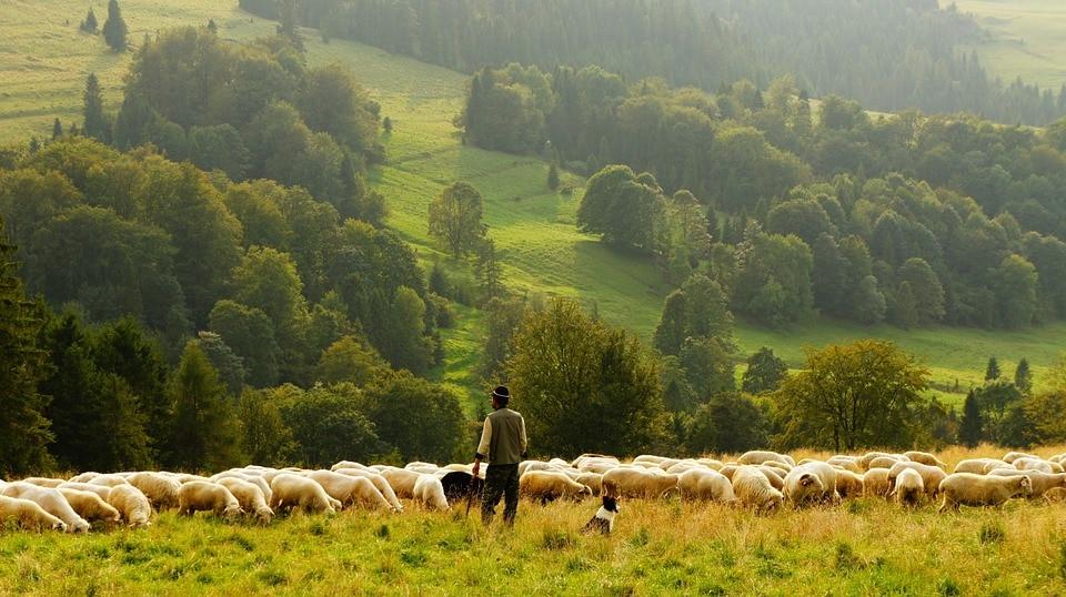 Photo of Progetto Pasturs: decine di volontari sugli alpeggi delle Alpi Orobiche bergamasche