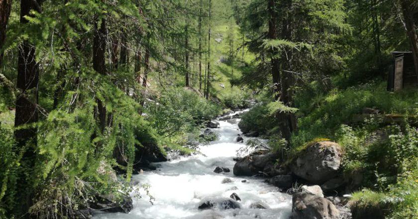 nature prescriptions, medicina, natura, outdoor, salute, benessere, scozia, regno unito