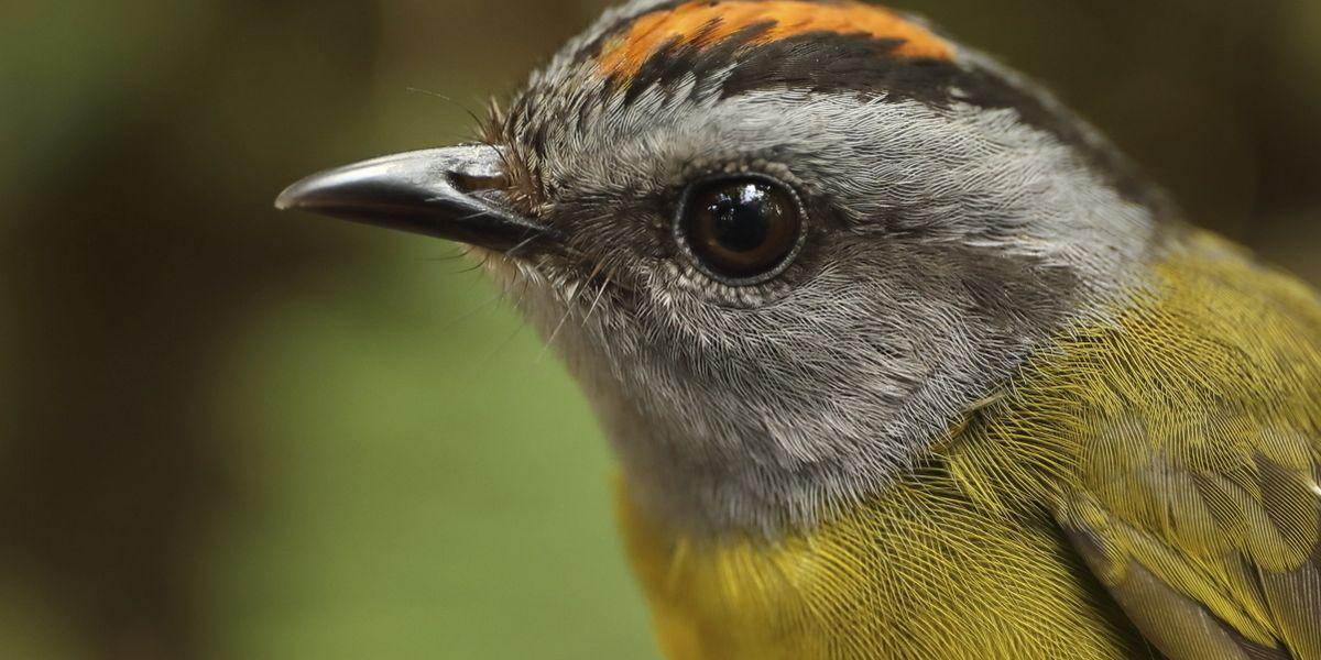 Photo of Una scala mobile verso l'estinzione degli uccelli delle Ande