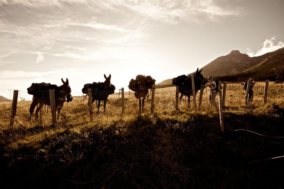 Photo of Nelle Terre Mutate con asini e muli per un trekking solidale