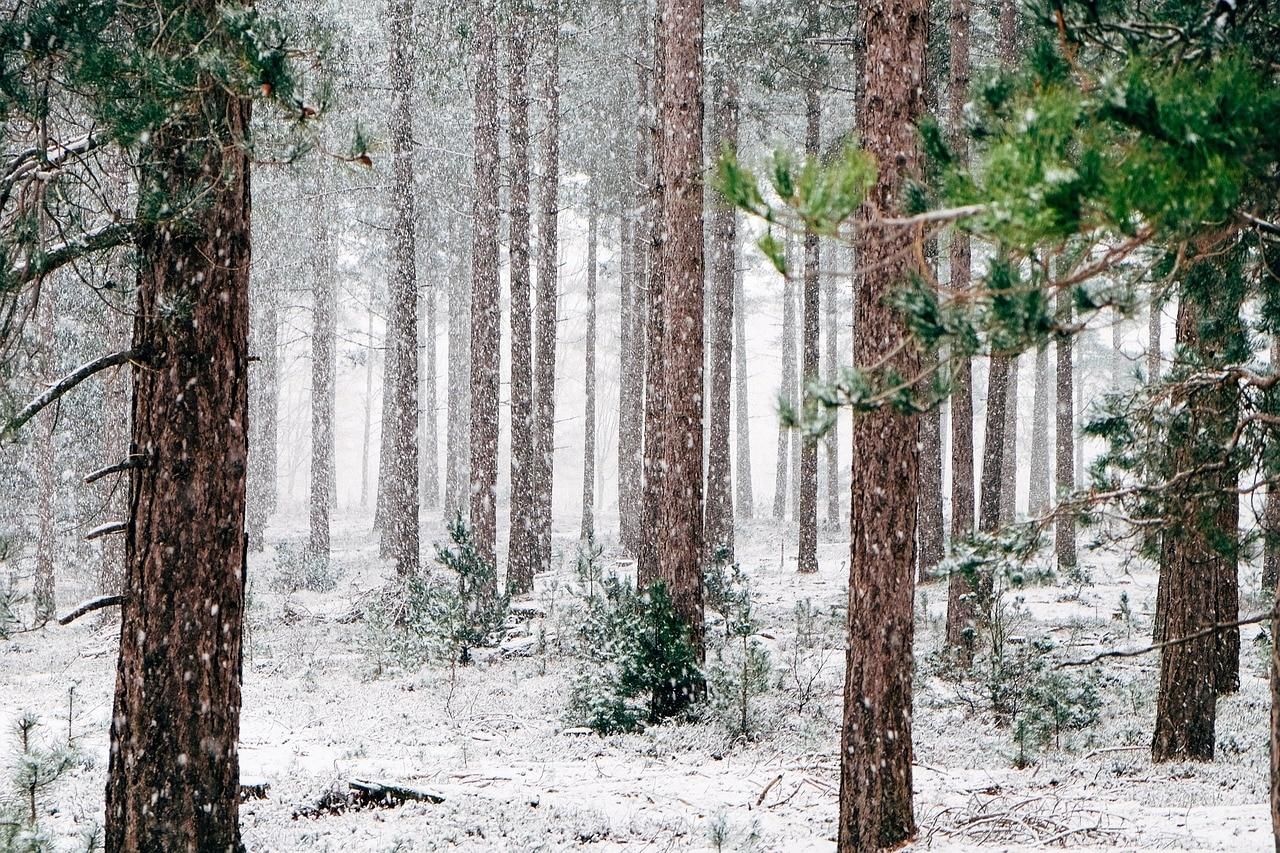 Photo of Il freddo fa capolino in montagna, in Alto Adige è già neve