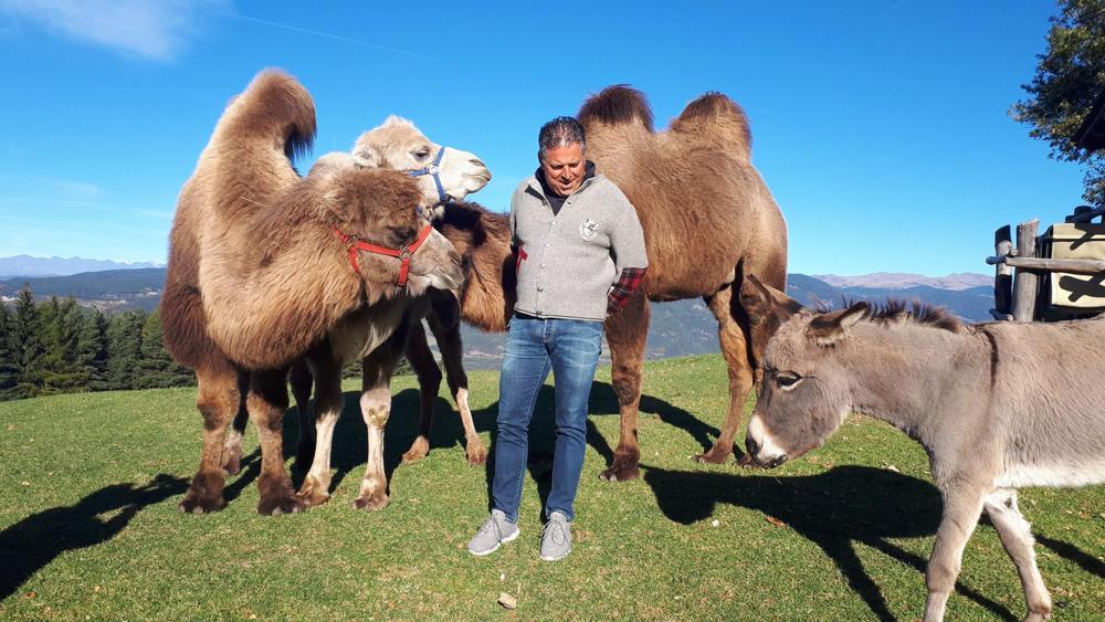 Photo of Sharan, Tiguan e Touran, i tre cammelli che vivono sulle Dolomiti
