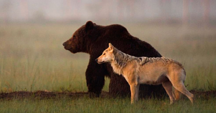 lupi, orsi, alto adige, abbattimento
