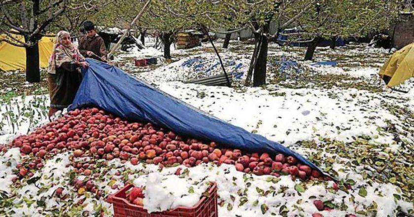 Kashmir, India, neve, crisi, cambiamento climatico, eventi estremi