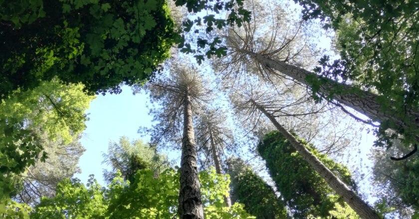 giornata degli alberi, ecologia, verde urbano, Ministero Ambiente