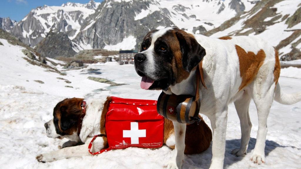 Unesco, Svizzera, Austria, San Bernardo, rischio valanghe. soccorso