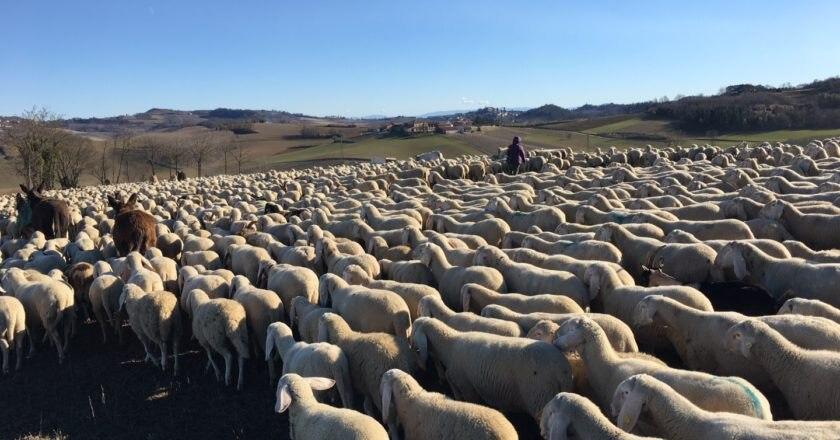 pastorizia, transumanza, patrimonio Unesco, Veneto, Coldiretti