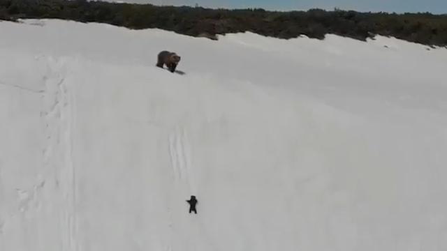 Photo of Un piccolo orso alpinista in difficoltà