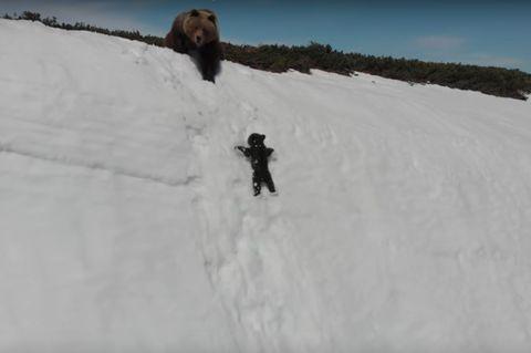 Photo of Il piccolo orso alpinista in difficoltà: un video tenero che svela il lato oscuro dell'utilizzo dei droni