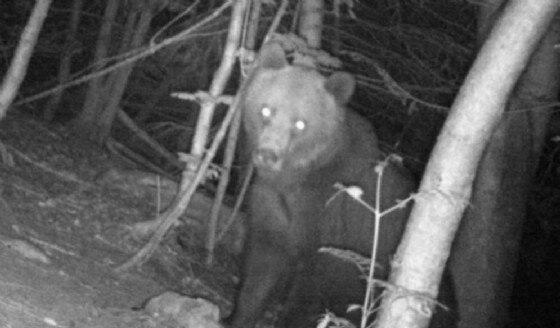 Photo of L'orso Elisio ucciso da un cacciatore sloveno