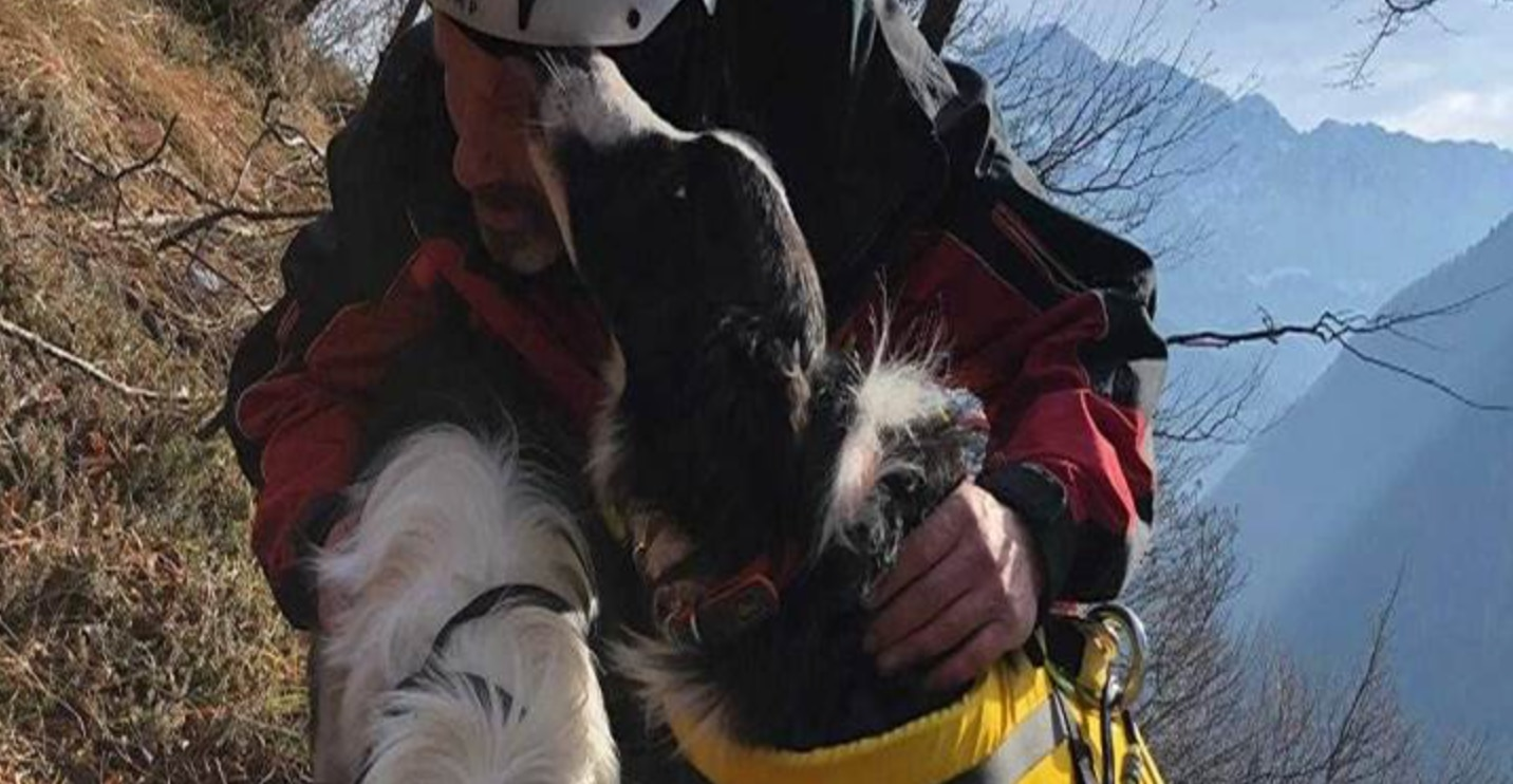 Photo of Neve e Jack, due cuccioli salvati in un dirupo vicino Erto