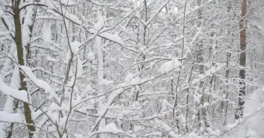 meteo, neve, immacolata, alpi