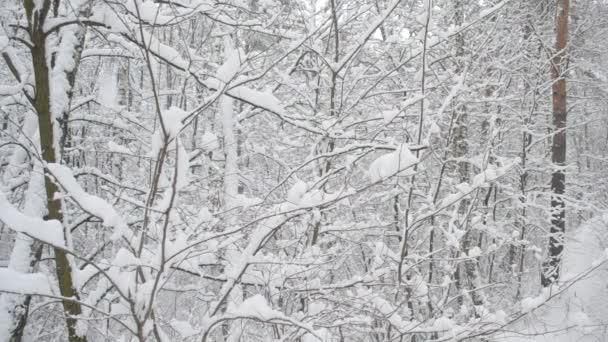 Photo of Immacolata sotto la neve sulle Alpi. Attenzione al forte vento