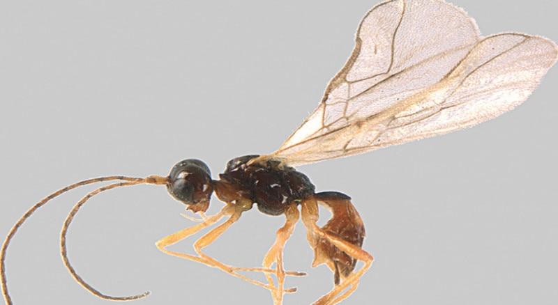 Photo of Scoperto un nuovo insetto sulle Alpi Marittime