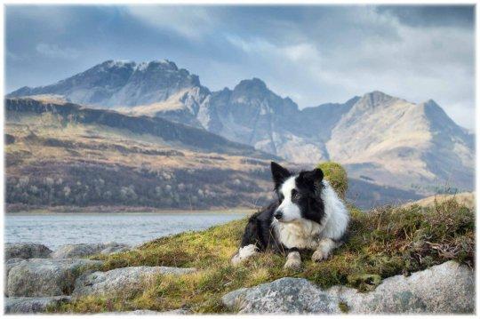 Scozia, cani, deadline news, fotografia