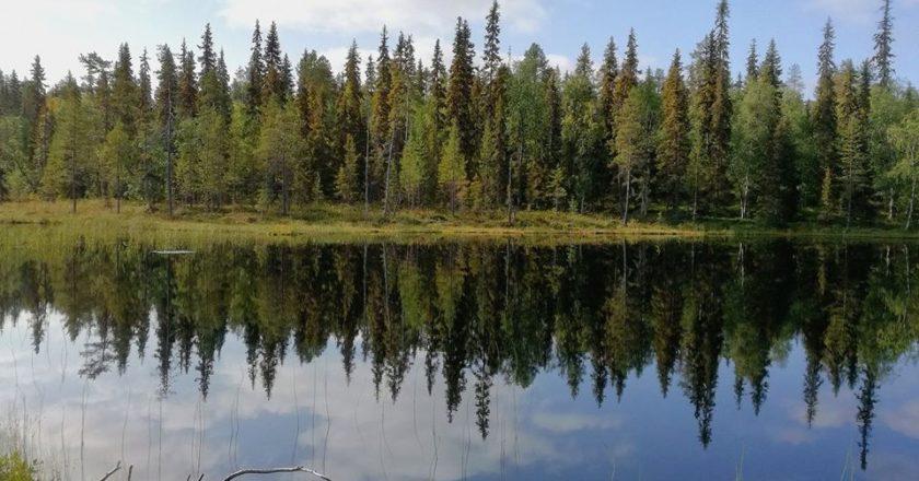 alberi, trilioni, satellite, cambiamento climatico, foreste, riscaldamento globale