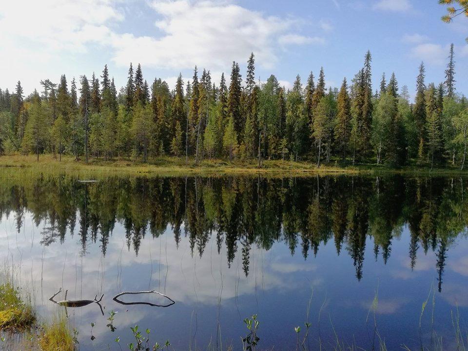 Photo of La Terra. Un Pianeta verde con 3 trilioni di alberi