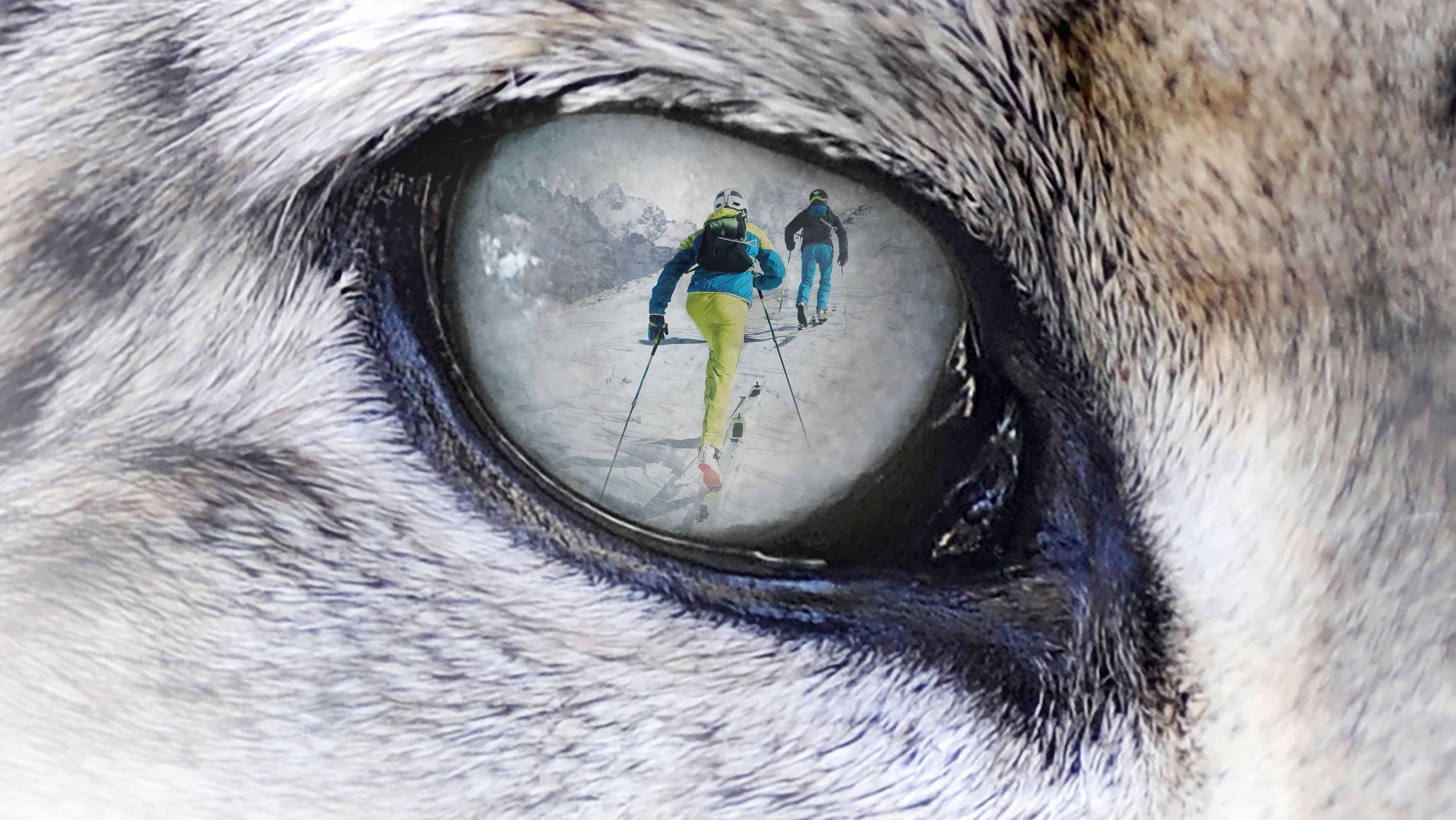 Photo of Faticare per una buona causa: il 2 marzo 2019 la decima edizione dello Snow Leopard Day