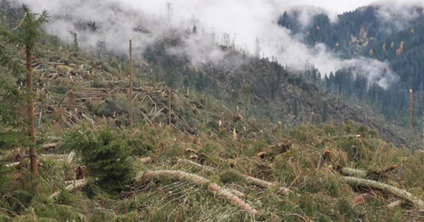 boschi, maltempo, trentino, sat, sentieri, montagna
