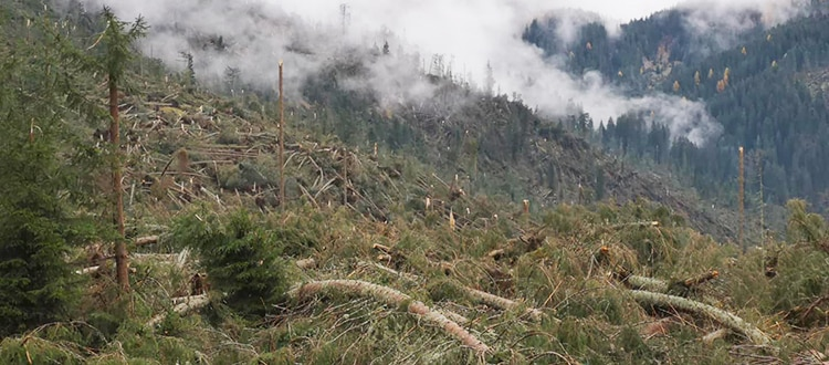 Photo of Maltempo: un terzo della rete dei sentieri trentini è danneggiata