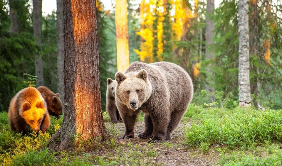 Photo of Tempo di risveglio per gli orsi. Il simpatico video di una fototrappola sulle Dolomiti di Brenta
