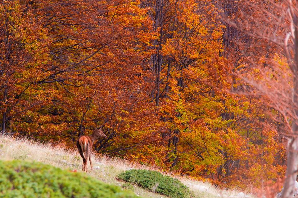 Photo of Il Parco Nazionale dello Stelvio punta alla Carta Europea del Turismo sostenibile