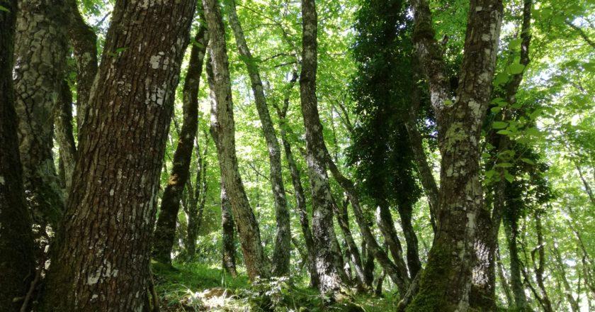 FAO, ONU, giornata internazionale delle foreste, PEFC, 21 marzo, ambiente, deforestazione, tempesta Vaia, cambiamento climatico