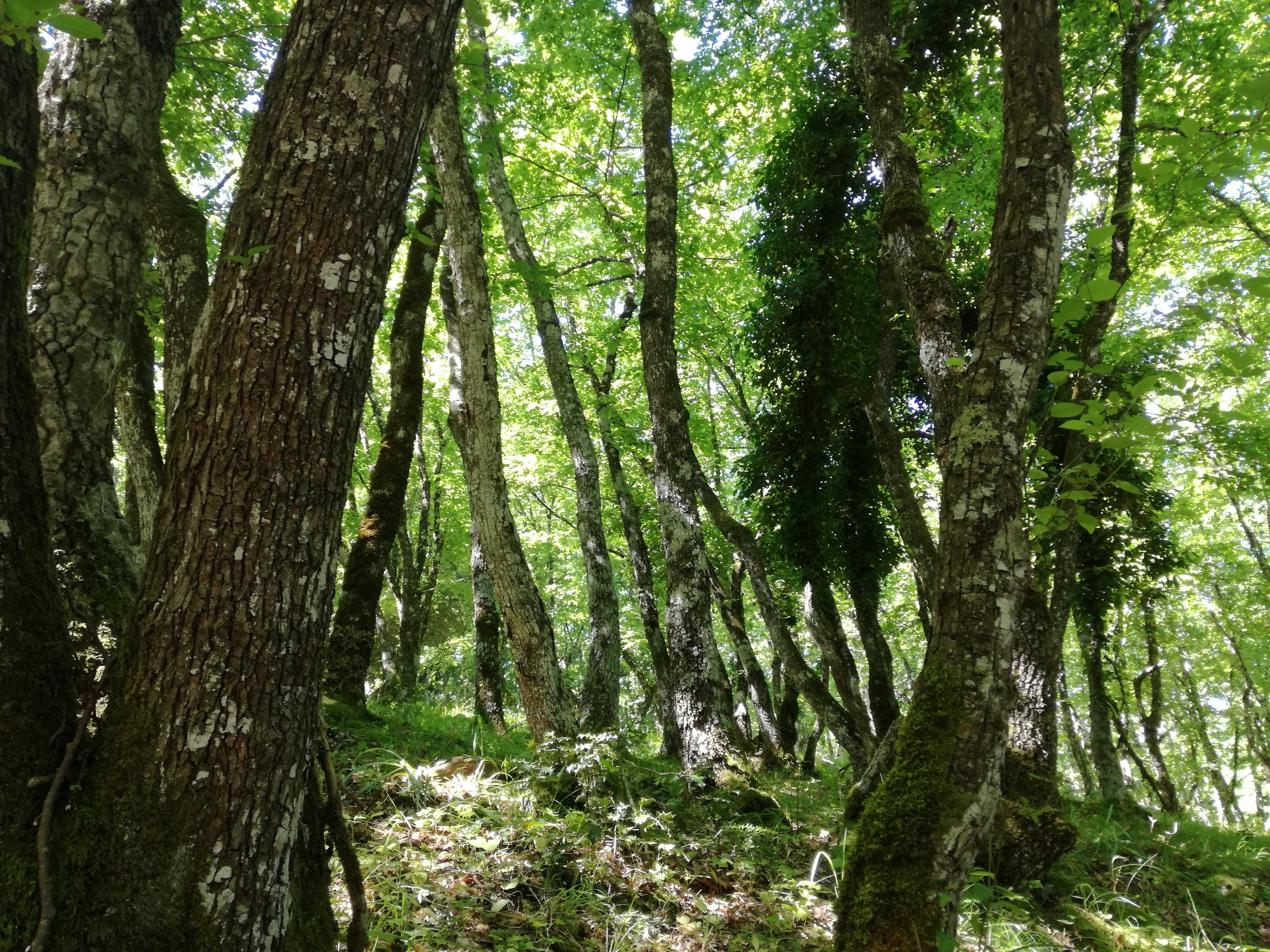 Photo of Giornata Internazionale delle Foreste 2019. L'appello a sostegno delle montagne del Nord-Est