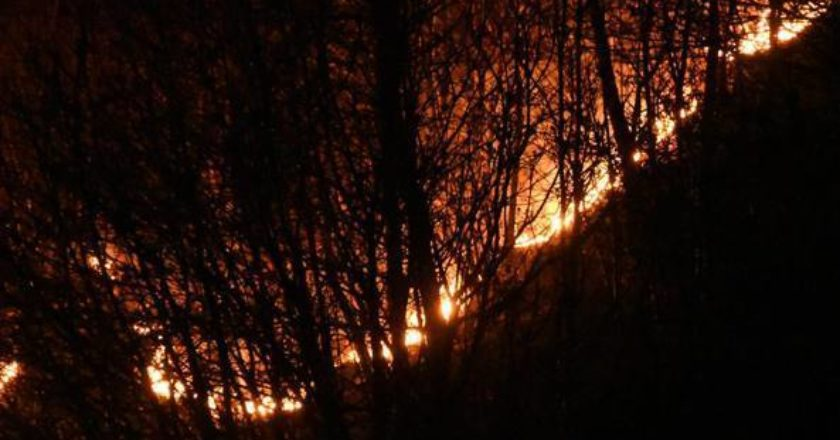 incendi, bosco