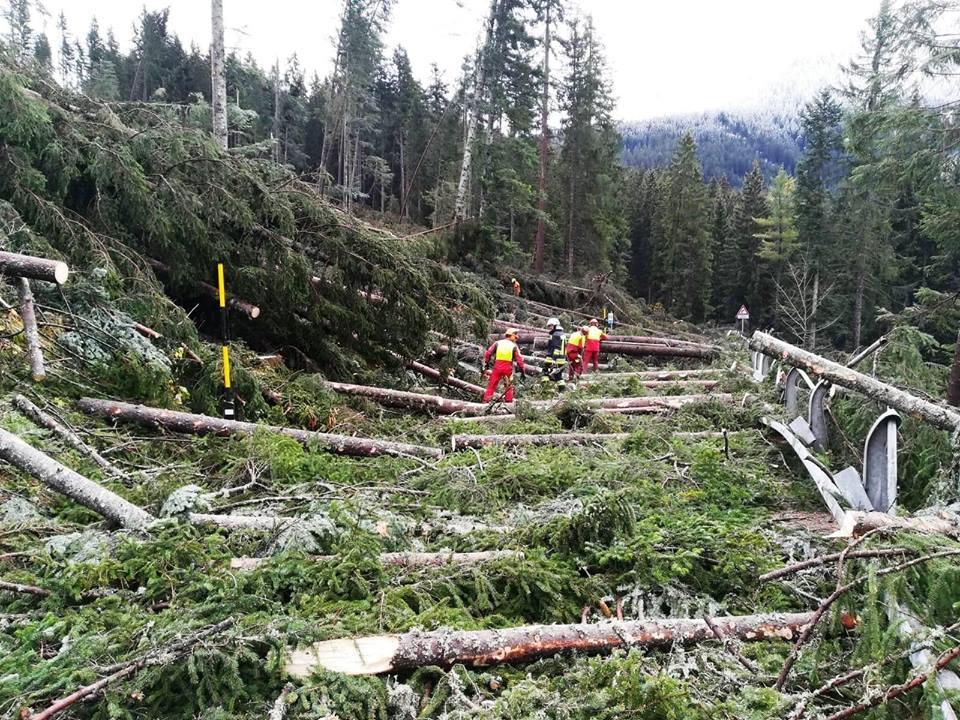 """Photo of """"Muoviti con attenzione"""". Una campagna informativa sui pericoli dei sentieri colpiti dalla tempesta Vaia in Trentino"""